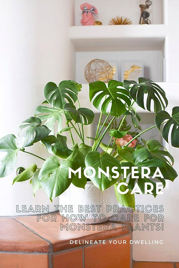 Monstera Care