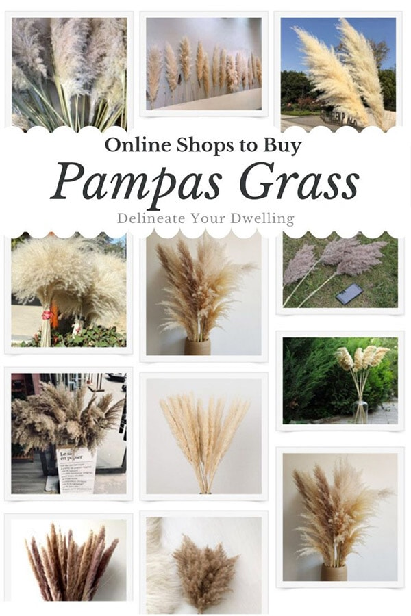 Best Online Pampas Grass
