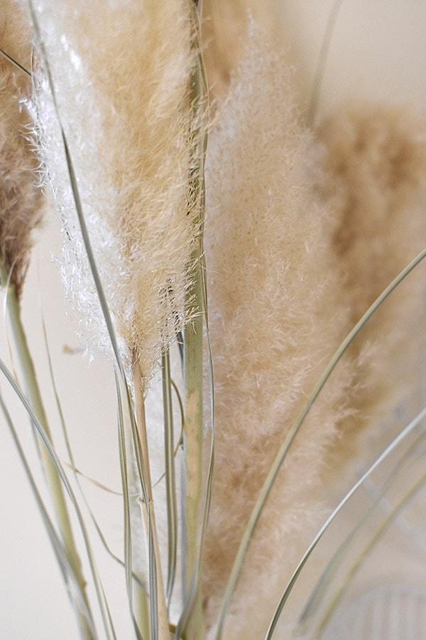 Pampas Grass seeds