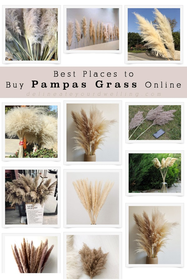 Dried Ornamental Pampas Grass