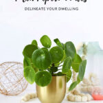 Pilea Care Best Tips