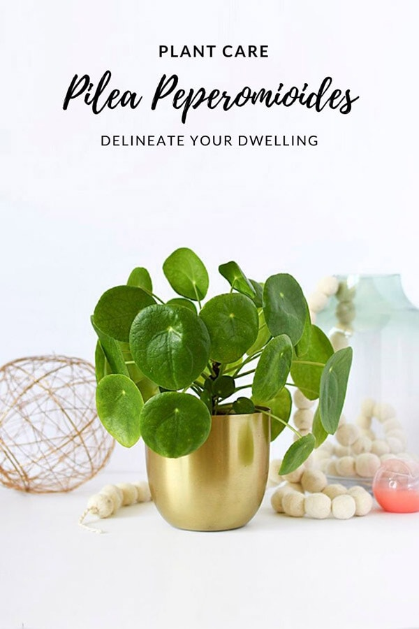 Pilea Care Best Tips