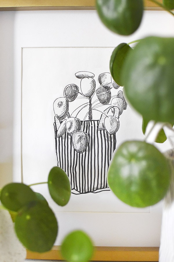 Pilea peperomioides Black and White Digital Print