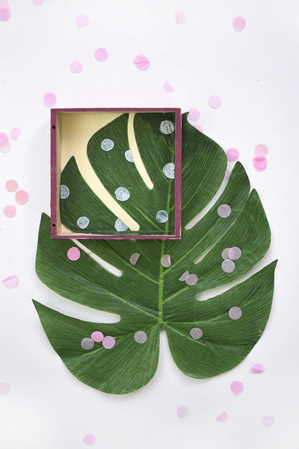 Monstera Plant Box