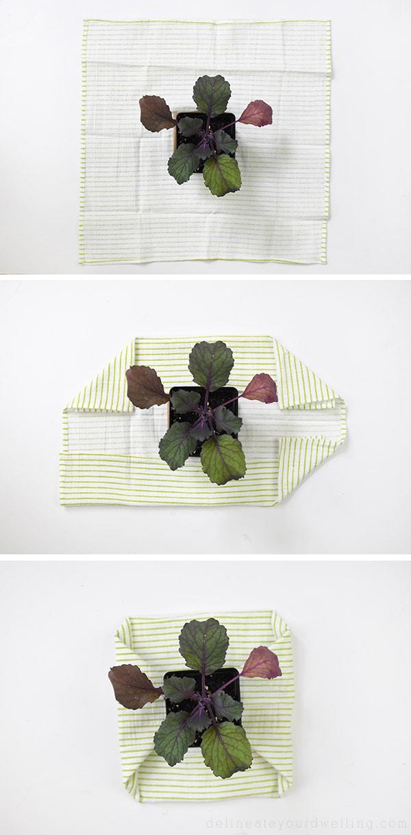 Plant Gift-Wrap fabric around Kale Plant