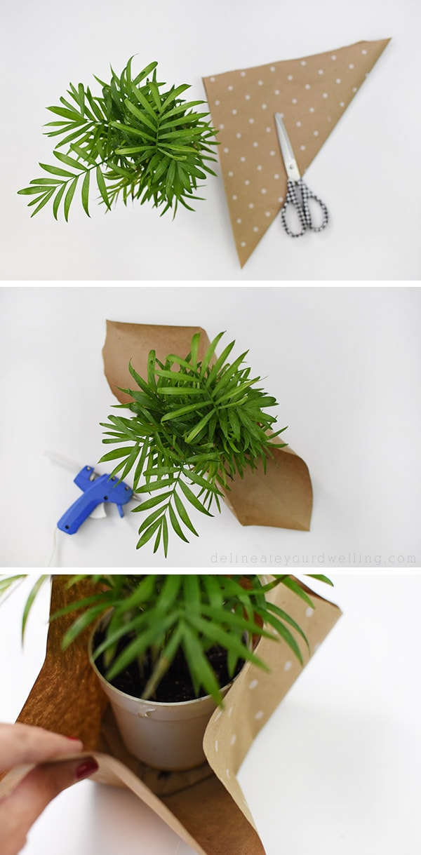 Plant Gift-Palm wrapping with paper steps