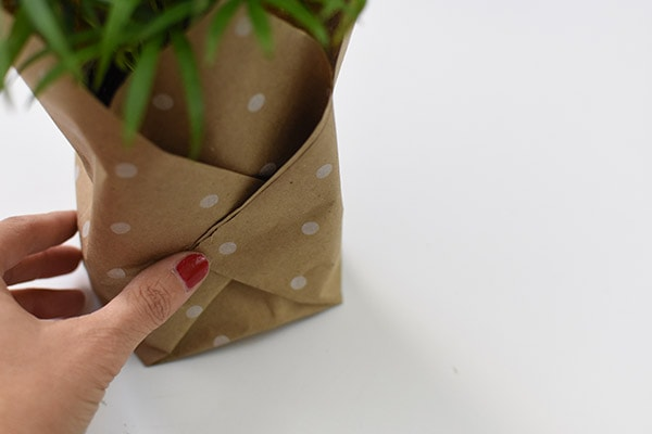 Plant Gift-Palm securing paper