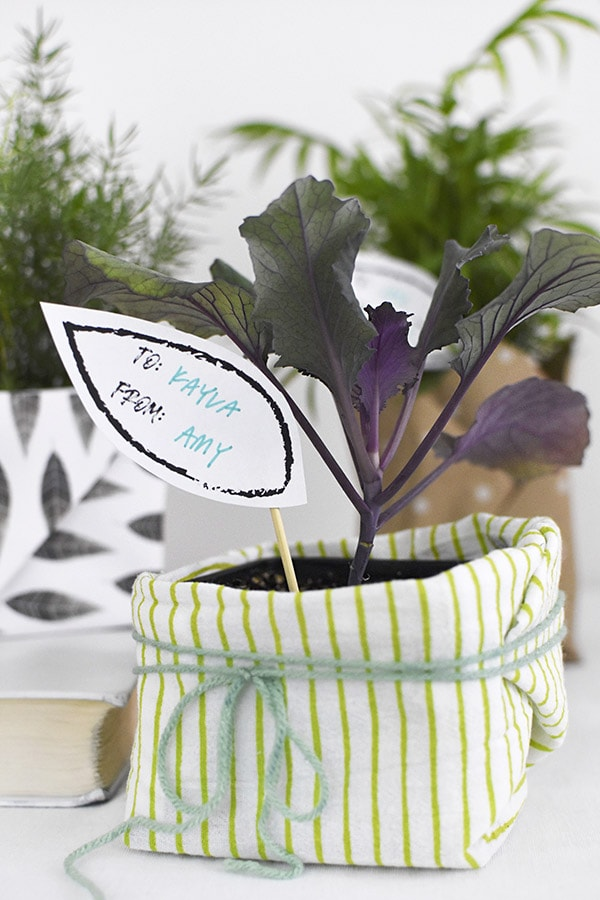 Plant Gift wrapped in yarn and green striped fabric