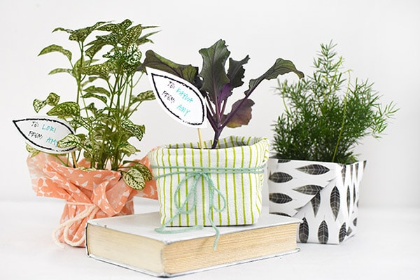 Wrapped Plant presents
