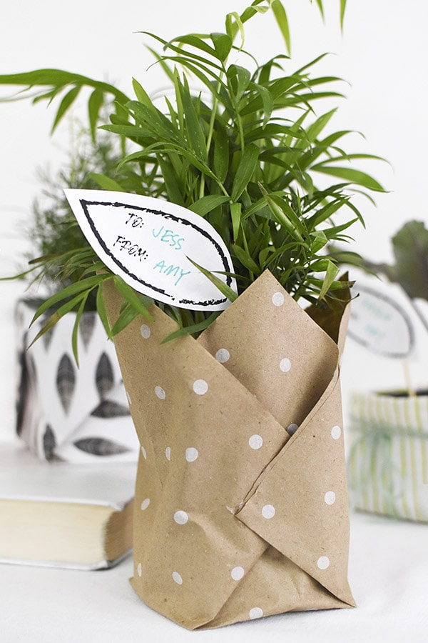 Paper wrapped plant gift