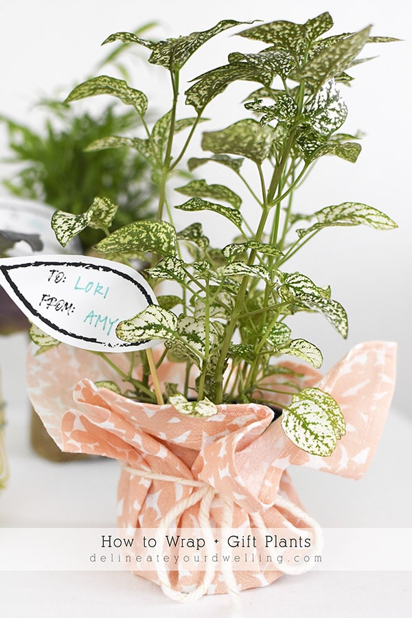 Coral fabric wrapped Plant present
