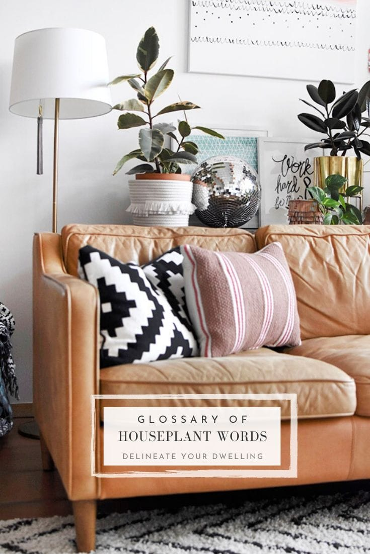 Plant Lover Houseplant words