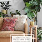 Important Indoor Houseplant Words