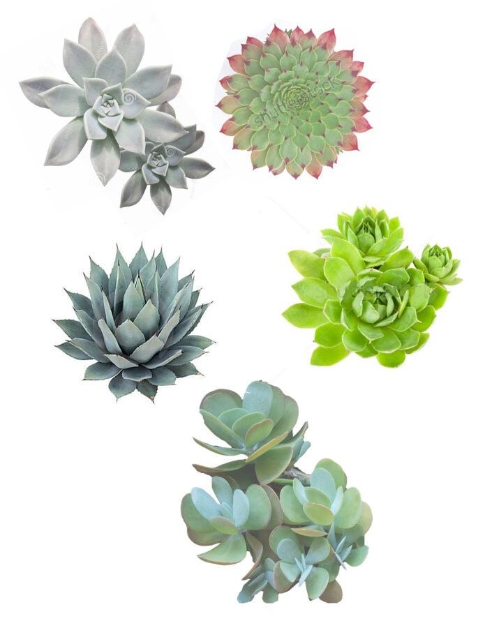Plant Templates