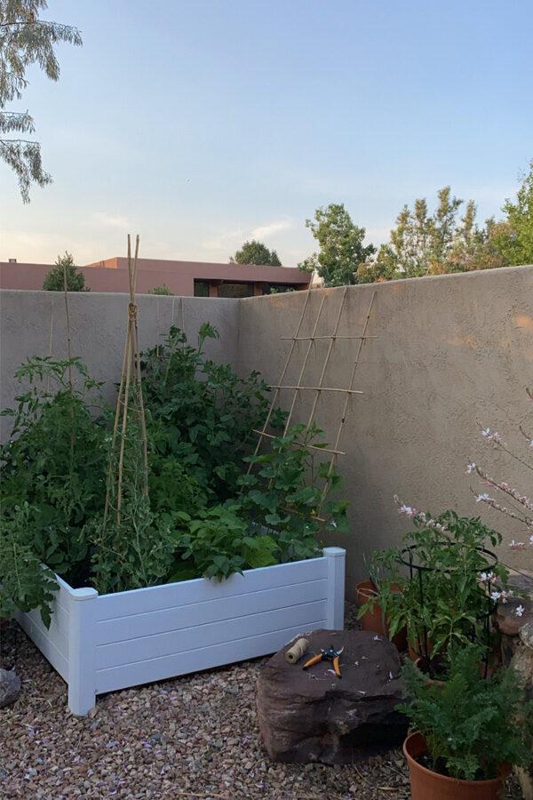 Raised Vegetable Garden in the evening
