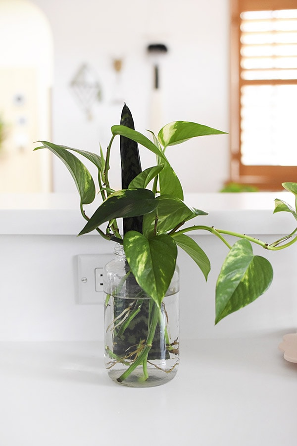 Water Plant propagation
